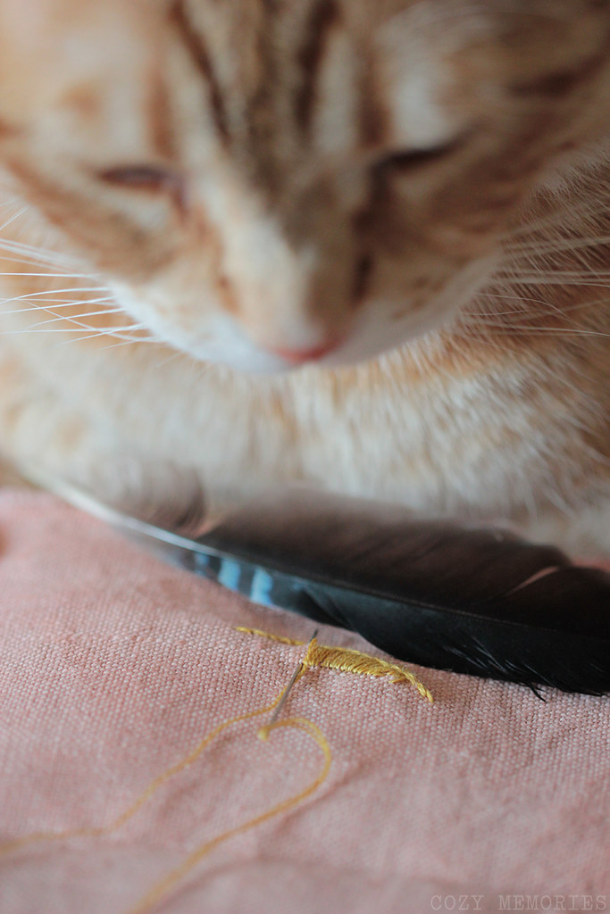 a cat and a feather