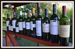 Bacanal 2013 – Vinos de Alta Gama – 1er Acto