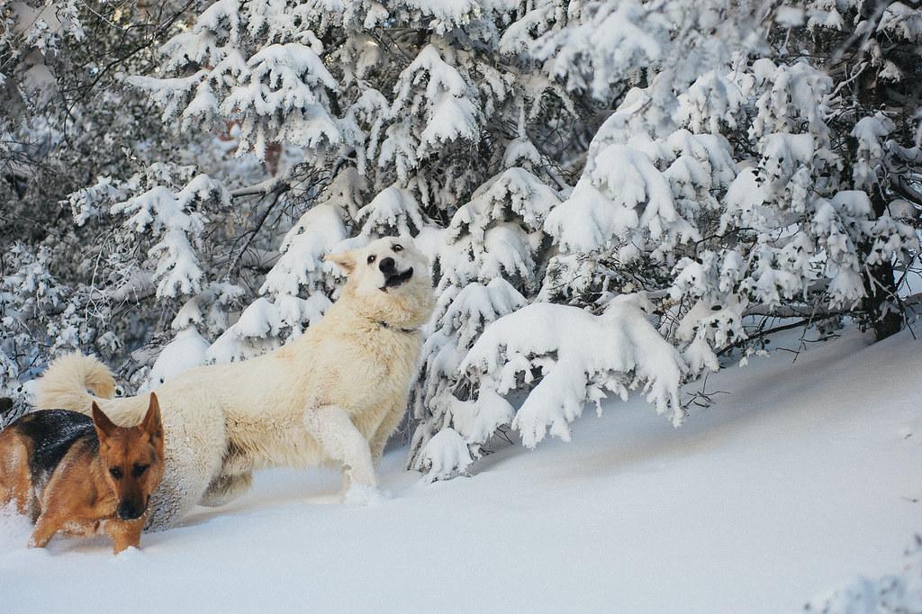 Idyllwild Snow expedition