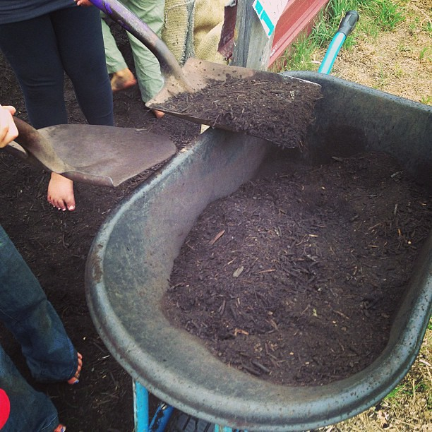 Filling the wheelbarrow - again! #coop #unschooling #naturallearning #gardening #neighbourhoodgarden