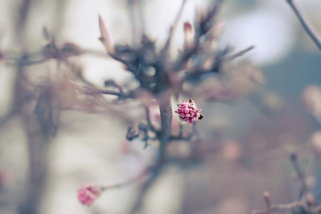 Hello, sweet spring bokeh