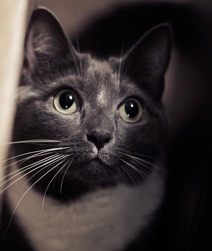 [フリー画像素材] 動物 (哺乳類), 猫・ネコ ID:201303121000