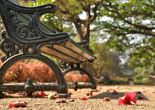 garden flower lalbagh bangalore chair gardenchair low angle shop ants eye view worm shot