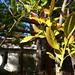 Garden Inventory: Lemon - 10