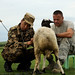 Riley and a veterinarian with the Mongolian Army examines a sheep during a hands-on classroom exam in northeastern Mongolia near the Russian border. Riley is in Mongolia working with its Army and Border Forces teaching and promoting veterinarian and Public Health best practices.(U.S. Air Force photo/Master Sgt. Jeremy T. Lock)