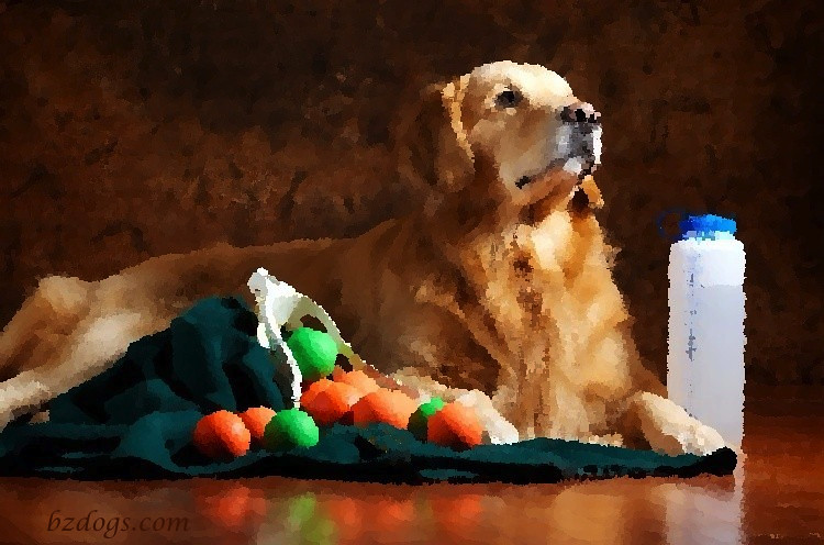 Still Life With Lacrosse Balls