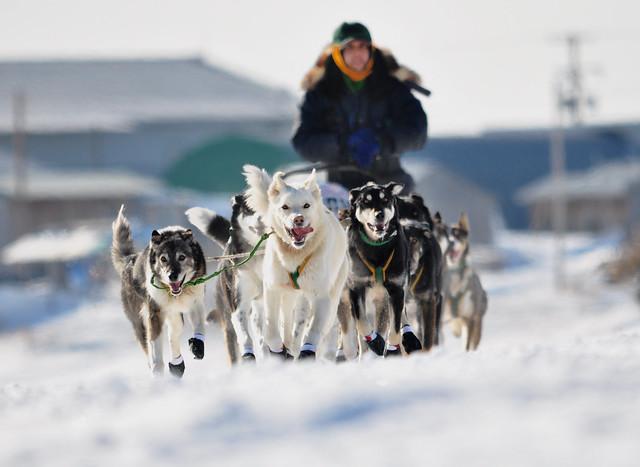 Iditarod 2013:  Luan Ramos Marques leaving Unalakleet