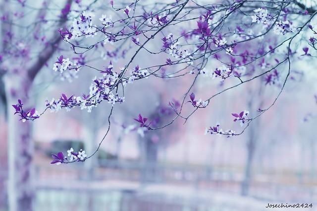 Comienzos de primavera