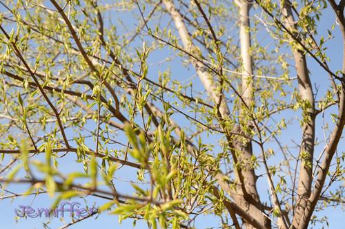tree new leafs