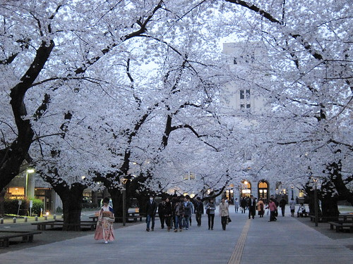 Graduation day and Cherry Blossom