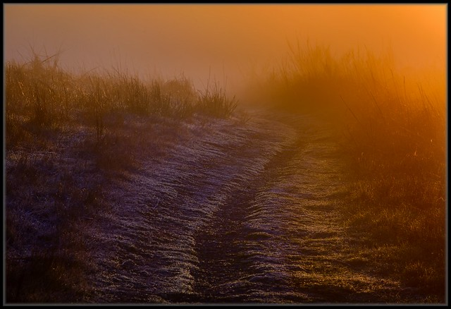 Cold Morning / Warm Light