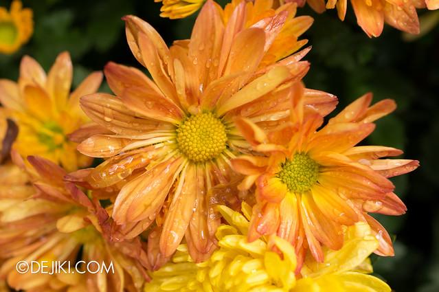 Sentosa Flowers 2013 - Freshly Wet 2