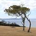 Trees on Maria Island (6) by 4nitsirk