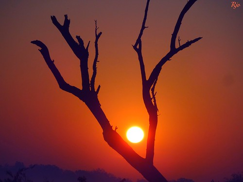 park india bird beauty sunrise time national ghana jungle sanctuary rajasthan bharatpur keoladeo at of