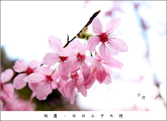 IMG_9468