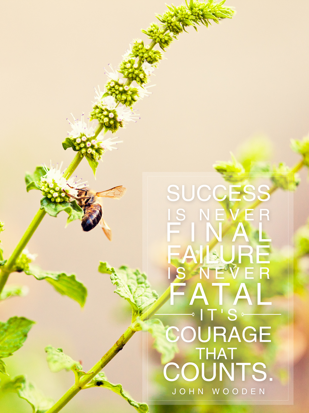 seeds // it's courage that counts