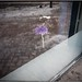 Bleu Flower on the Inside by karlstad Igår