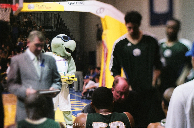 Mav'Riks, the world's most enthusiastic turtle, spies on Reno's chalk talk during a team timeout.