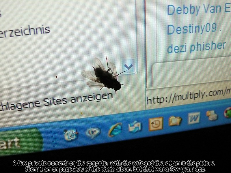 Two flies on a computer
