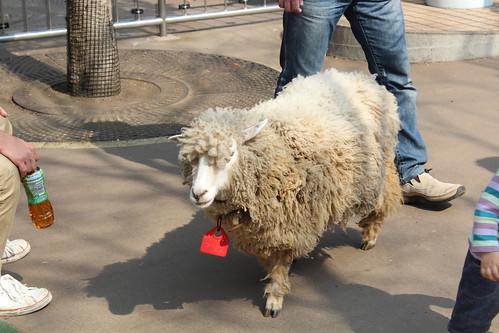 上野動物園_羊