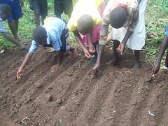 crop(0.0), agriculture(1.0), sowing(1.0), field(1.0), soil(1.0), farmworker(1.0),