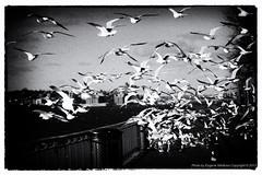 Birds, Brooklyn