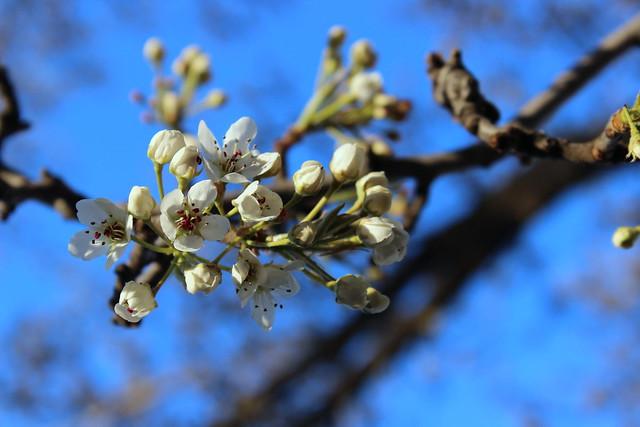 Spring Blossoms - Shade Mode