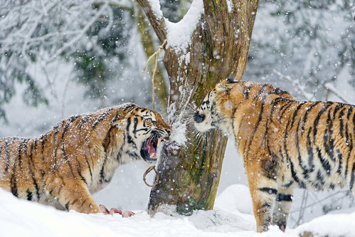 Argument between daugter and mother by Tambako the Jaguar