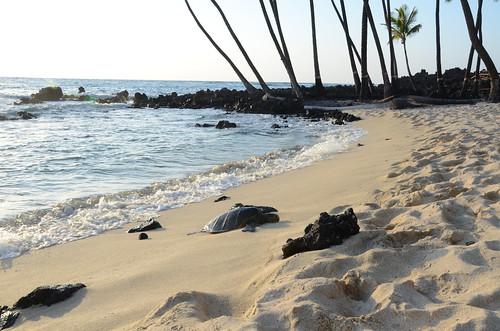 Hawaii 591