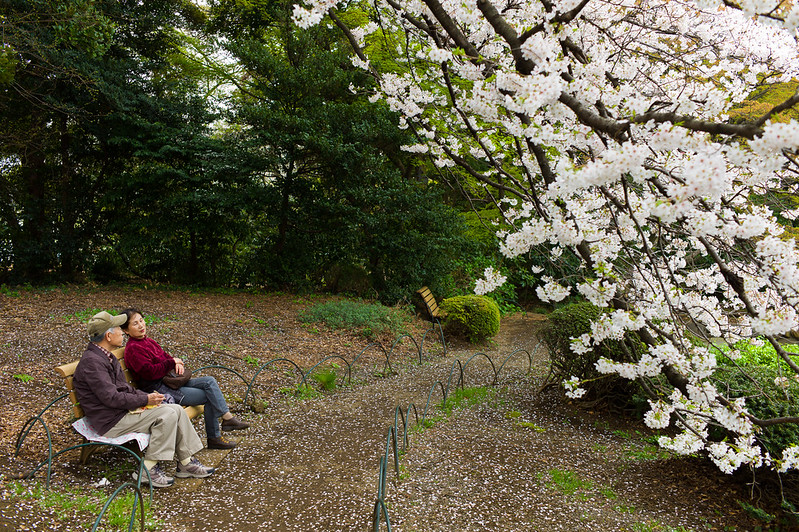Shinjuku Gyoen offers a quiet place of refuge from city life.