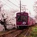 Sakura Tunnel by ALEX S.F.C.