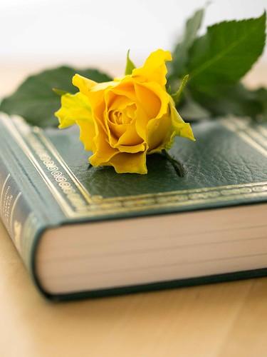 Rosen und Bücher zum