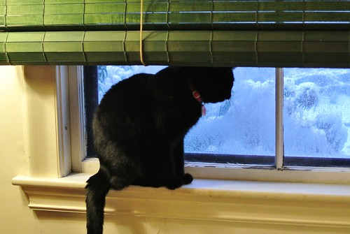 Stan monitors snowfall accumulations