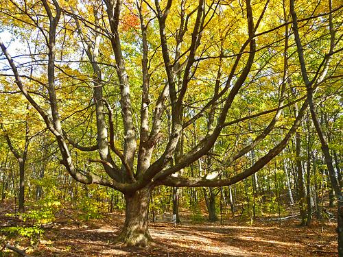county autumn trees tree fall nature colors forest leland woods natural outdoor path michigan branches scenic panasonic trail bigtree limb naturalarea leelenau m22 outdoorbeauty scenicmichigan fz18 scenicsnotjustlandscapes jimflix houdekdunes leelenauconservancy