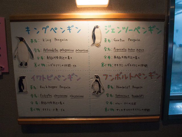 4 types of penguins