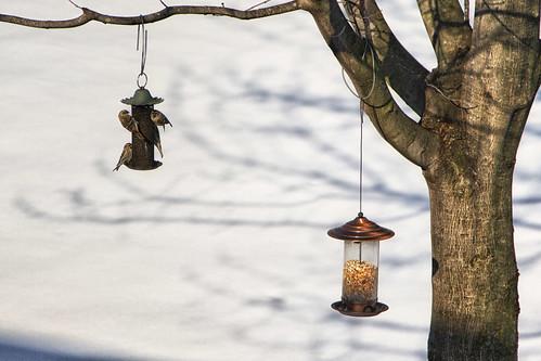 birds--2