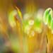 Mousse / Moss ©GnondPomme