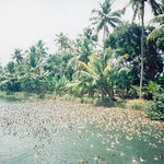 kerala_backwater_birds2