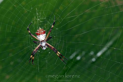 Arachnophobia by Megan Lorenz