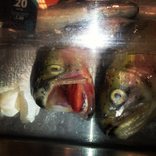 Who Knew Fish Had Tongues?