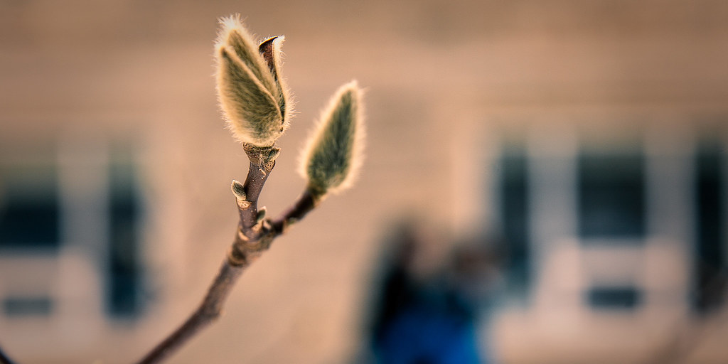 Spring Budding
