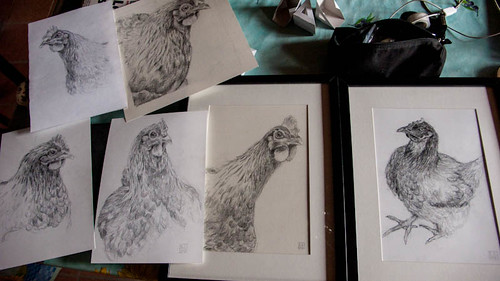 Chickens (pencil drawings)