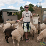 Dan Feeds the Sheep - Raglan, New Zealand