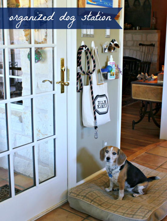 Hi Sugarplum | Organized Dog Station