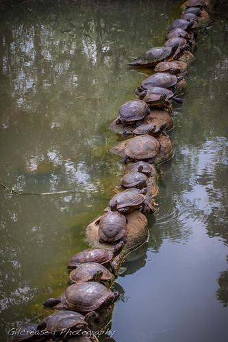 zoo ellen texas turtle reptile tx trout lufkin