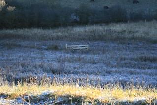 frosty 076