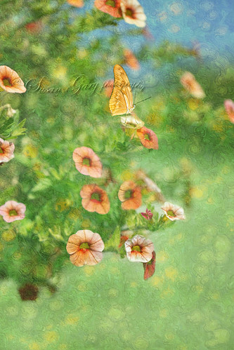 Butterfly Fantasy by *GloriousNature*bySusanGaryPhotography