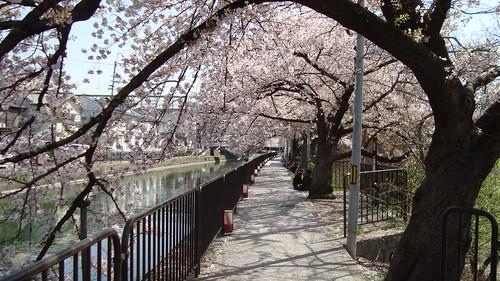 2013/04 深草 琵琶湖疏水 #01