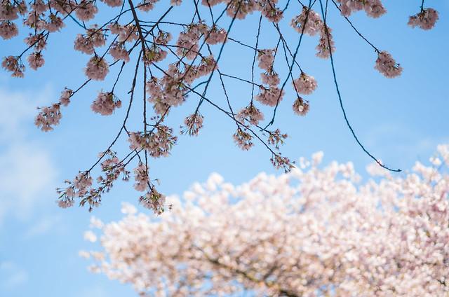 Gravely St. Blossom 2