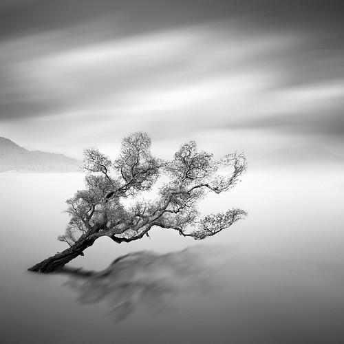 Water Tree 6